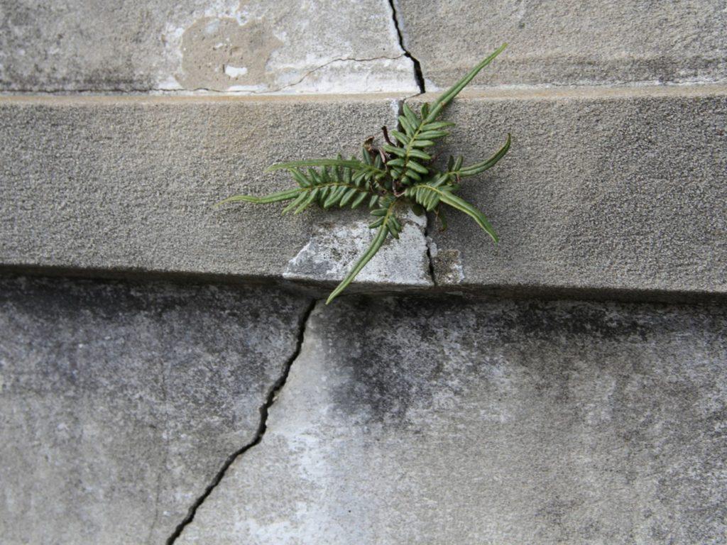 MARATUM-el origen de las grietas en edificación